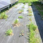 太陽光発電所の防草シートについて