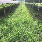 梅雨の中三重県亀山市で太陽光発電所の除草剤散布してきました 三重県鈴鹿市の草刈り専門店草刈り本舗桐生