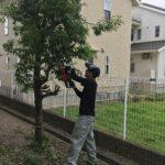 鈴鹿市で樹木の剪定してきました 三重県鈴鹿市の草刈り専門店草刈り本舗桐生