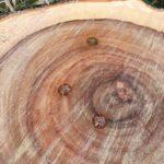 鈴鹿市で樹木の伐採です 三重県鈴鹿市の草刈り業者 草刈り本舗桐生