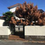 三重県津市にて空き家の樹木の剪定してきました 三重県鈴鹿市の草刈り業者 草刈り本舗桐生