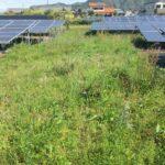 多気郡大台町にて太陽光発電所除草剤散布です 三重県鈴鹿市の草刈り業者 草刈り本舗桐生