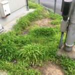 鈴鹿市にて企業内の緑地管理です 三重県鈴鹿市の草刈り専門店 草刈り本舗桐生